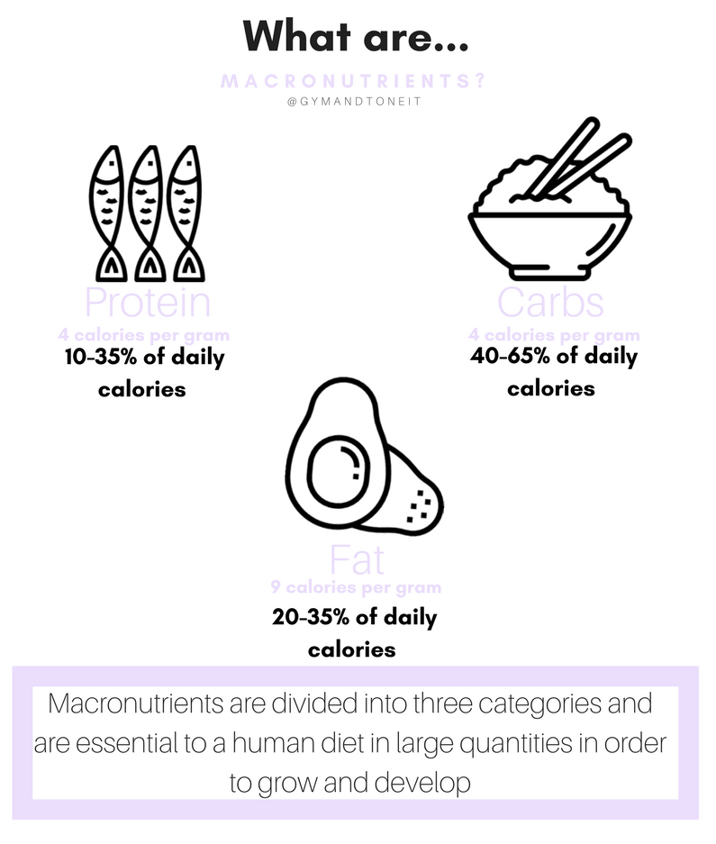 Back to Basics: What are Macronutrients?